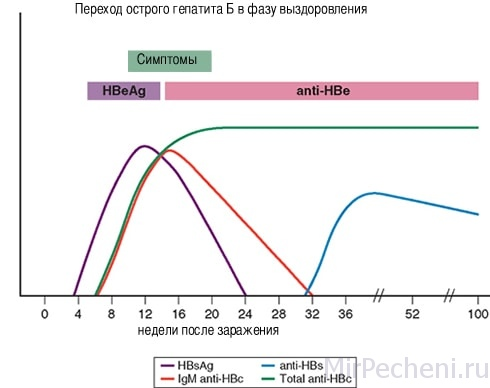 Переход острого гепатита Б в фазу выздоровления