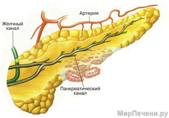 Панкреатический канал