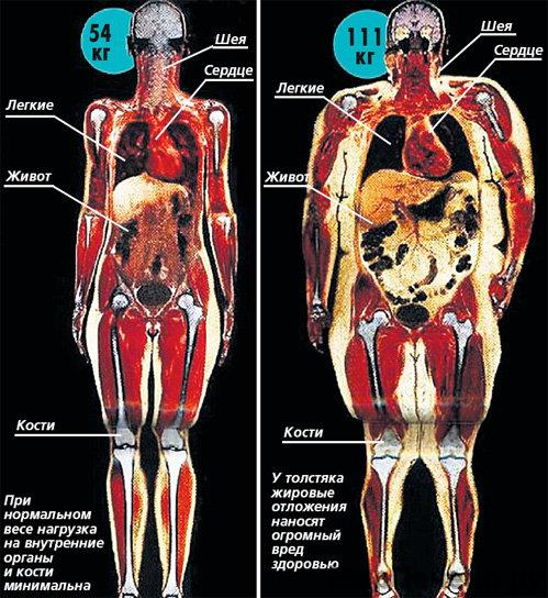 Беременность жир в организме