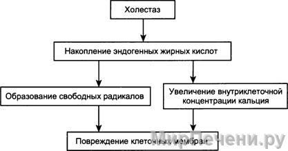 Клиническая картина холестаза