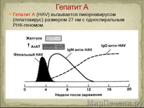 Процесс развития гепатита А