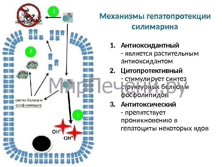 Механизмы гепатопротекции