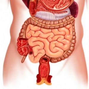 Ценарикс действует на кишечник