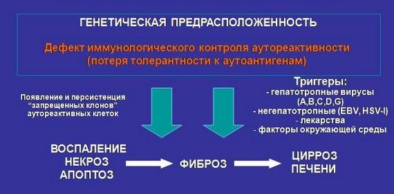 Патогенез аутоиммунного гепатита
